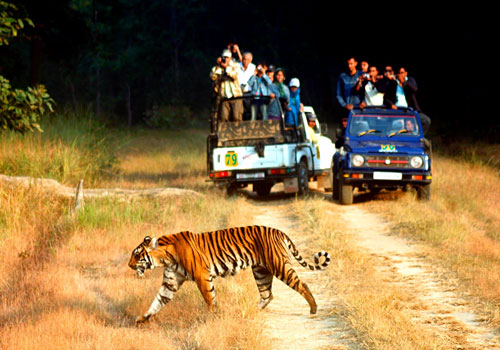 jeep safari jim corbett